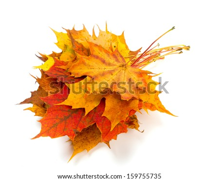 bunch of maple leafs on white background - stock photo
