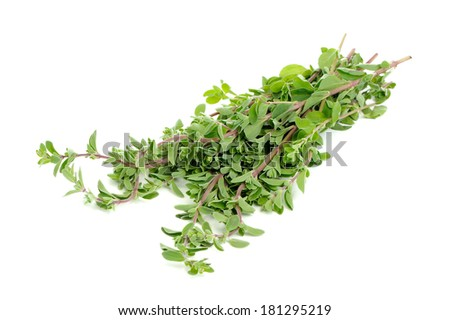 Bunch of Marjoram Herb Isolated on White Background - stock photo