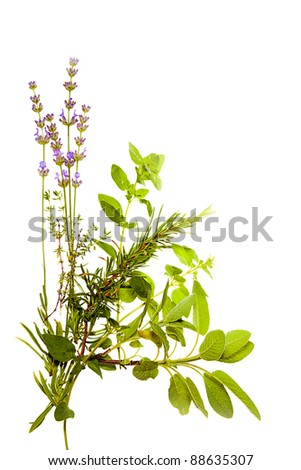 Bunch of Mediterranean herbs on pure white background: lavender, sage, oregano, thyme. Spring and summer concept; cooking concept. Copy space. - stock photo