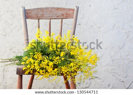 Bunch of mimosa flowers on wooden rustic chair - stock photo