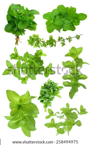 bunch of mint isolated on white background - stock photo