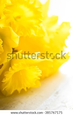 Bunch of narcissus flowers on a white wooden background - stock photo