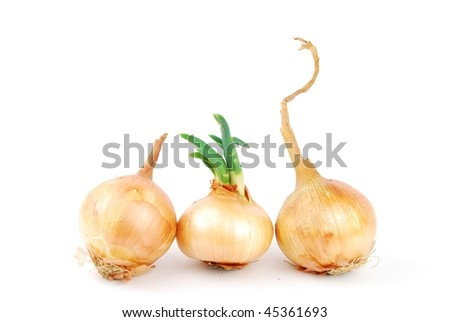 bunch of onions isolated on white background - stock photo