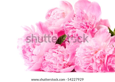 bunch of peony flowers isolated on white