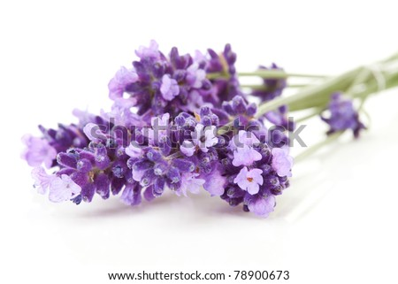 Bunch of picked lavender over white background - stock photo