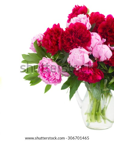 bunch   of  pink and red   peonies in glass vase close up  isolated on white background