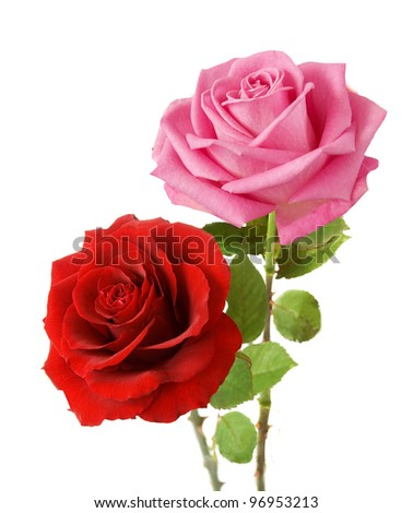 Bunch of pink and red roses isolated on white background - stock photo