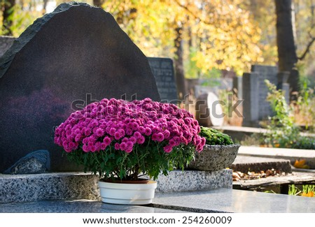 Bunch of pink Chrysanthemum in flowerpot on grave, flower standing on cement slab grave in Poland. Sunny weather in autumn day.