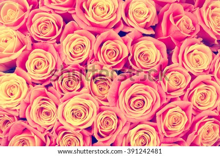 Bunch of pink colored rose flowers close-up as background. Filtered image. - stock photo