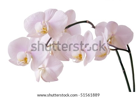 bunch of pink orchid flowers