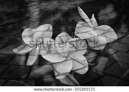 bunch of pink plumeria screen on blur perspective old stone floor - stock photo