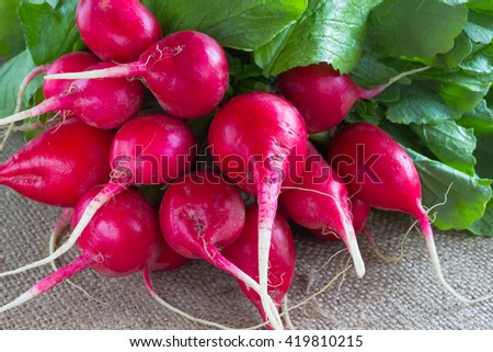 bunch of pink radishes on sacking - stock photo