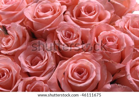 bunch of pink roses background