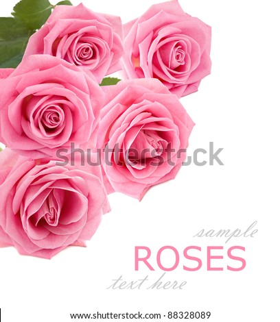 Bunch of pink roses isolated on white with sample text