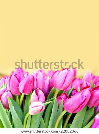 Bunch of pink tulips on a flower market with copyspace - stock photo