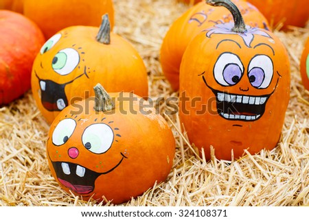 bunch of plump and juicy holiday pumpkins on farm or patch. Orange pumpkins for Jack o'lantern or thanksgiving. Self decorated with scary faces - stock photo