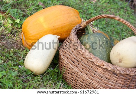 Bunch of pumpkins with a basket - stock photo