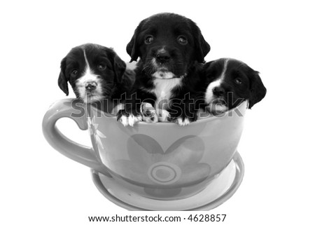 Bunch of puppies in a big tea cup