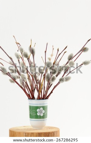 Bunch of pussy willow twigs in green vase on white background - stock photo