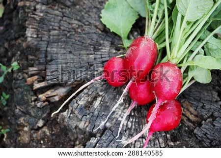 bunch of radishes on wooden boards - stock photo