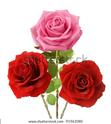 Bunch of red and pink roses isolated on white - stock photo