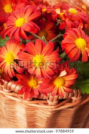 Bunch of red chrysanthemums in a basket - stock photo