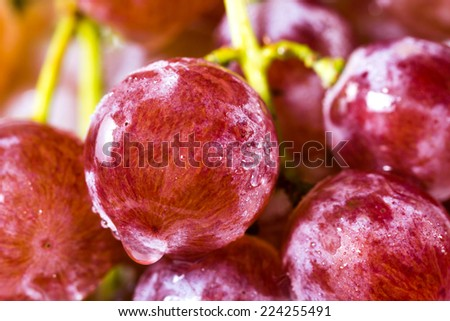Bunch of red grapes , fresh with water drops background. - stock photo