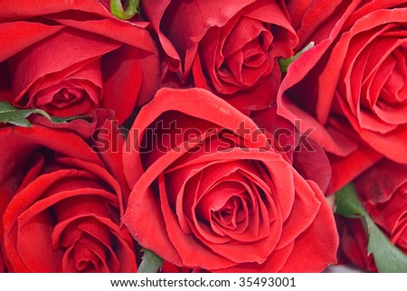 Bunch of red roses - stock photo