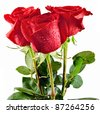 bunch of red roses isolated on white - stock photo