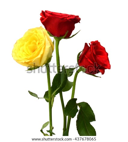Bunch of red, yellow and pink roses isolated on white