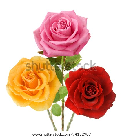 Bunch of red, yellow and pink roses isolated on white - stock photo