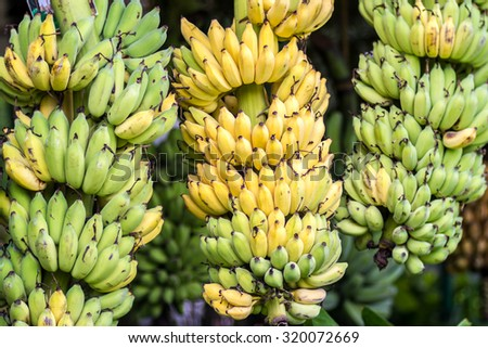 Bunch of ripe banana In tropical countries - stock photo