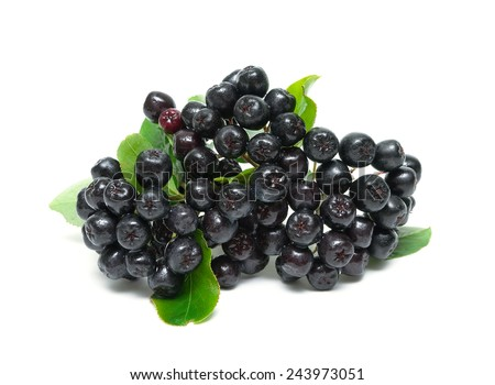bunch of ripe berries of Aronia isolated on a white background. horizontal photo. - stock photo