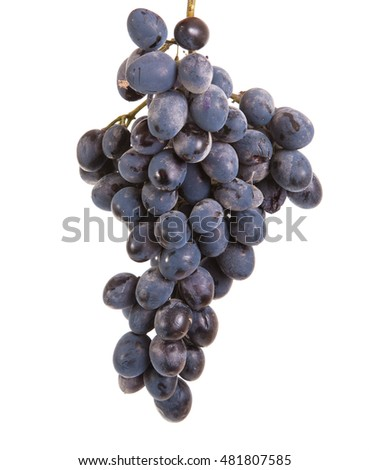 bunch of ripe blue grapes. isolated on white background