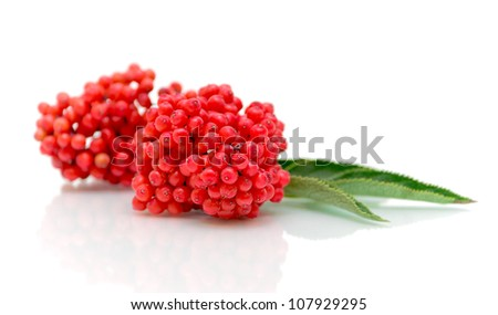 bunch of ripe elderberry on a white background with reflection closeup - stock photo