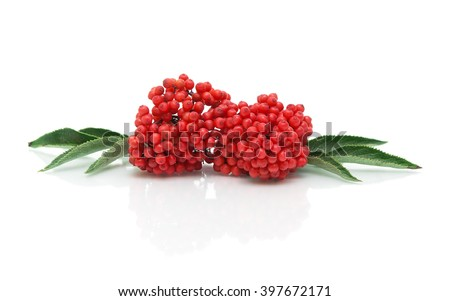 bunch of ripe elderberry on a white background with reflection closeup. horizontal photo. - stock photo