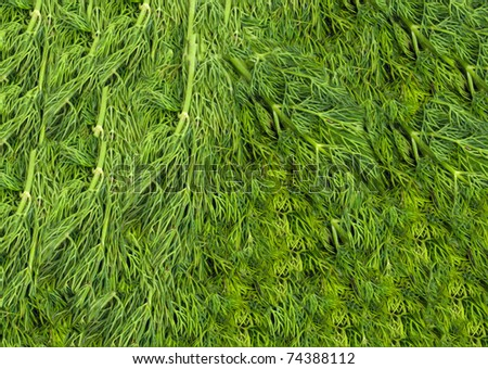 Bunch of ripe green dill . background - stock photo