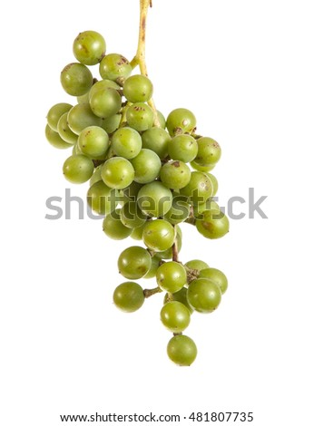 bunch of ripe green grapes. isolated on white background