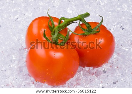 Bunch of ripe tomatoes on the vine laying in ice - stock photo