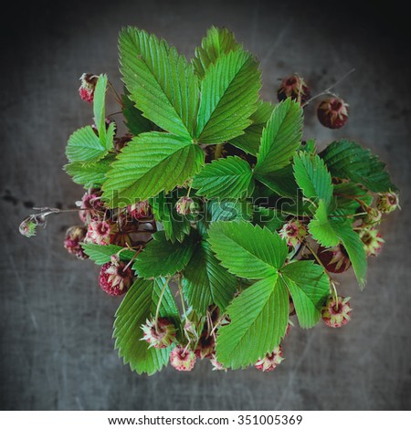Bunch of ripe wild strawberries with leavesover old metal background. Rustic style. Natural day light. Top view. Square image  - stock photo