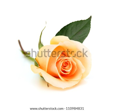 Bunch of rose flowers on white background - stock photo