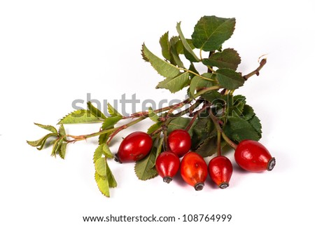 Bunch of rosehip berries with some green leaves