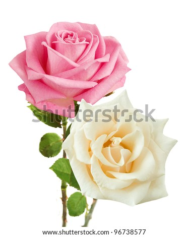 Bunch of rosy and cream roses isolated on white - stock photo