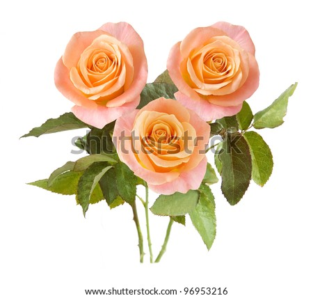 Bunch of rosy roses isolated on white background - stock photo