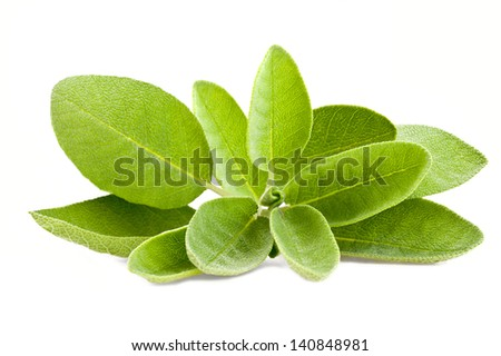 Bunch of sage isolated on white - stock photo