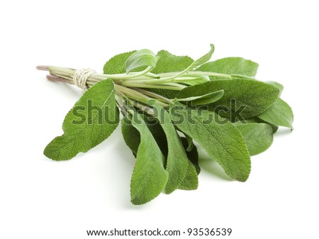 bunch of sage leaves tied together with a string