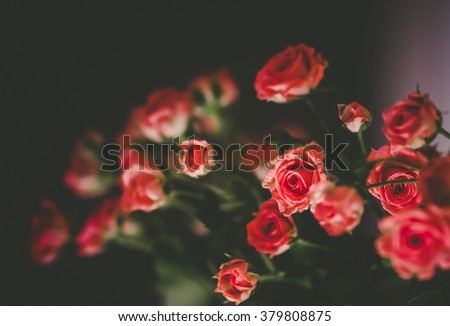 Bunch of small pink roses. Roses bouquet. Romantic flowers. Selective focus and narrow depth of field. - stock photo