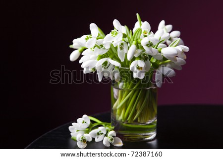 Bunch of snowdrops in basket on dark purple background