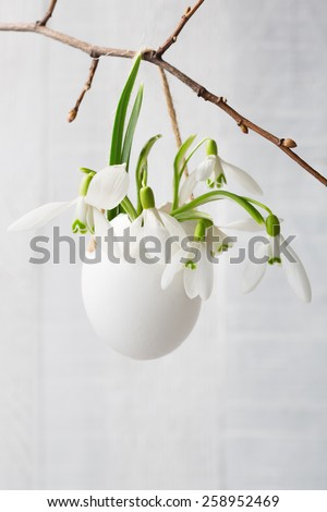 Bunch of snowdrops in  egg shell on white  wooden board.    Shallow depth of field,  focus on near flowers. Easter concept - stock photo