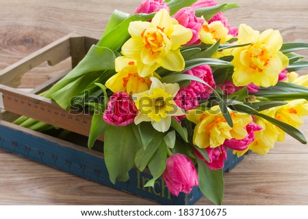 bunch of  spring tulips and daffodil flowers in wooden crate - stock photo